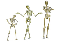bones in the body, Cephalic Vein
