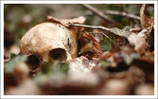 The Bone Scatterer
