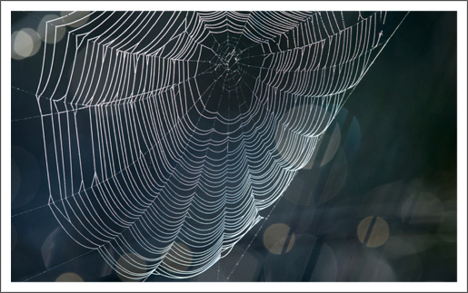 Minding the Webs by Lisa Cooke